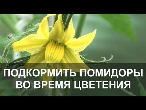 Подкормка Помидор во Время Цветения.