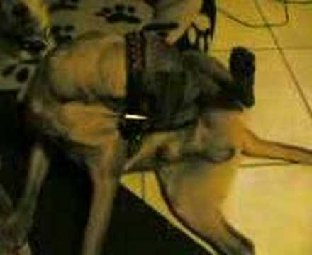 dog giving blowjob back pussy sex