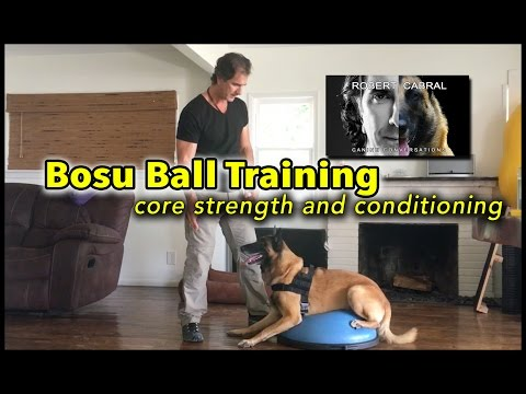 Bosu Ball for Your Dog's Core Training – Dog Health and Training