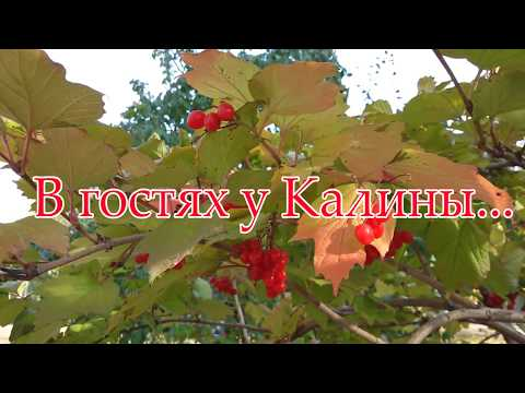 Иван Разумов! Ансамбль Калина! ЗИМНЯЯ ПЕСНЯ! Russian folk song...