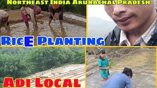 Amazing Rice Planting with Local Hindi | Motiir Arik Lokpeng Village | Adi Northeast India Arunachal