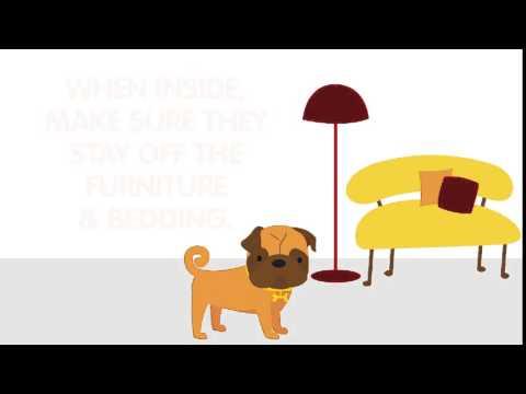 Summer Allergies  – Outdoor Pet & Dog Allergies | ZYRTEC® Allergy