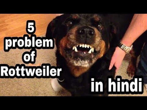 5 problems of Rottweiler in hindi || dogs biography