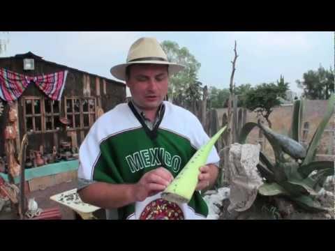 Кактусы. Что делают из кактусов?