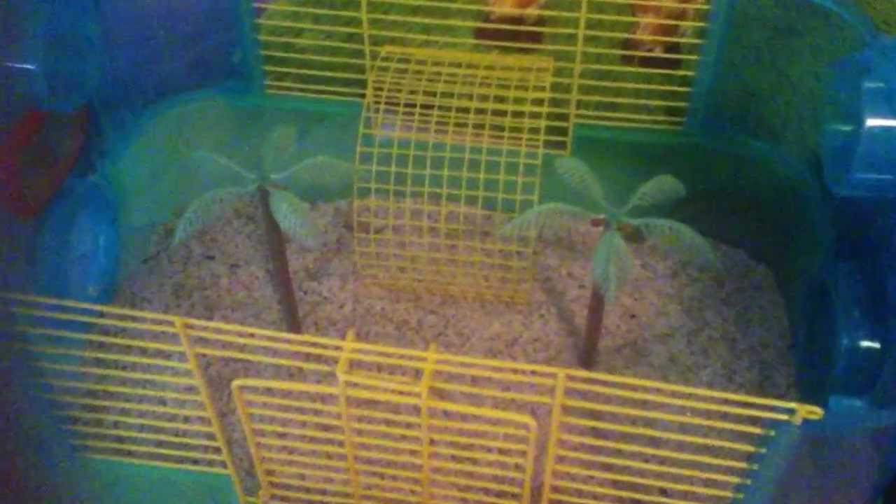 how to make a hermit crab cage