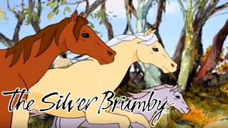 The Silver Brumby | The Old Prospector Saves a Friend and Benni Returns the Favour | FULL EPISODES