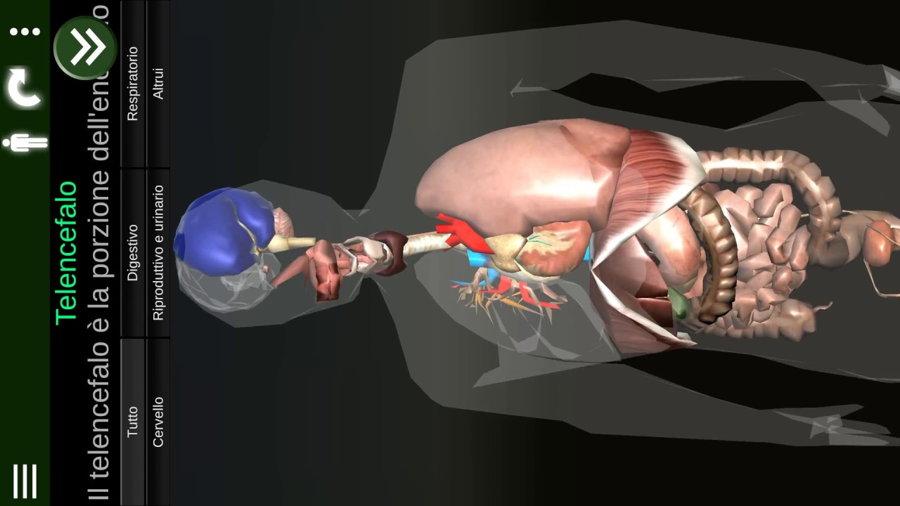Organi interni 3d anatomia it youtube for Interni 3d