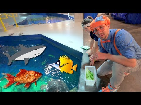 Blippi Visits The Aquarium | Educational Fish and Animals for Kids and Toddlers