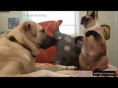 Funniest Compilation of Cat Videos Best of all times funny cats