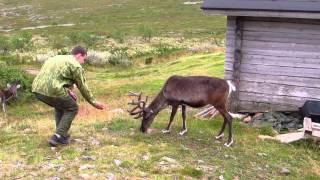 Природа Лапландии