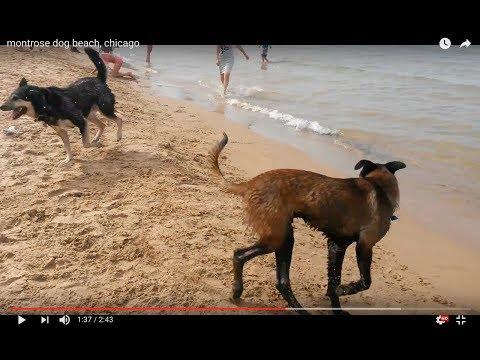 Montrose Dog Beach, Chicago - YT