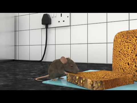 Rodent control and proofing by JG Pest control, mice and rat extermination