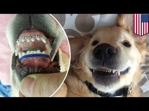 จัดฟันให้ลูกสุนัข แก้ปัญหาสบฟันอยู่หมัด