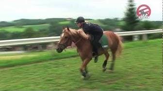 Mounted Games - Österreich