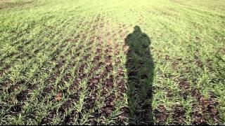 18 12 11 Agroprofi пшеница в засуху но даст 8 т с 1 га