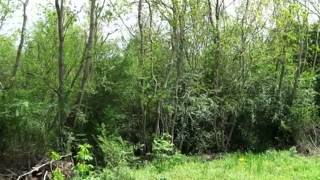 Homes for Sale - 0 County Road 107 Abbeville AL 36310 - James Grant