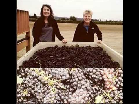 On The WIne Road - Harvest at Amista Vineyards, Dry Creek Valley