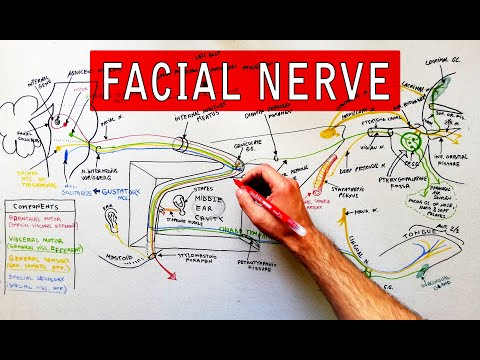 Facial nerve examination | Seventh cranial nerve.