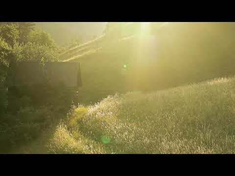 Meditative Landscapes: 1 Sunset and the Rye(meditational, ASMR sound experience, birds&crickets)