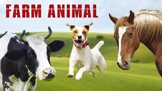 Farm Animal Sounds - Animal Sound Effect