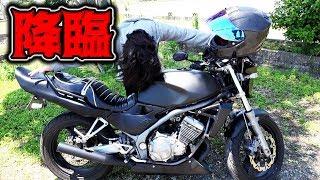 ゆっきーのバイクが秋田から来た!!! thumbnail