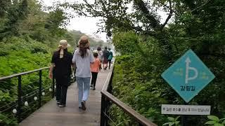 제주 자연생태계가 잘 보전된 에코랜드 곶자왈 숲속을 링…