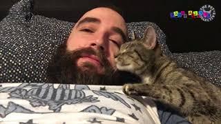 Приколы с котанами  Ласковые кошки