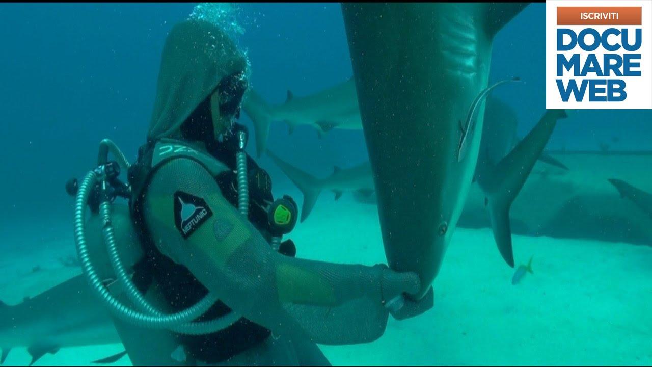 Documentario squalo tigre national geographic lo for Disegno squalo