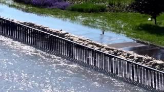Hochwasser 2013 - Region Magdeburg