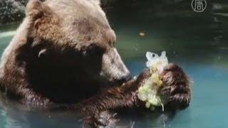 Жара в Рио: животных кормят ледяными продуктами (новости)