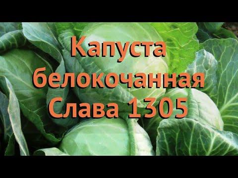 Капуста белокочанная Слава 1305 (slava 1305) 🌿 обзор: как сажать, семена капусты Слава 1305
