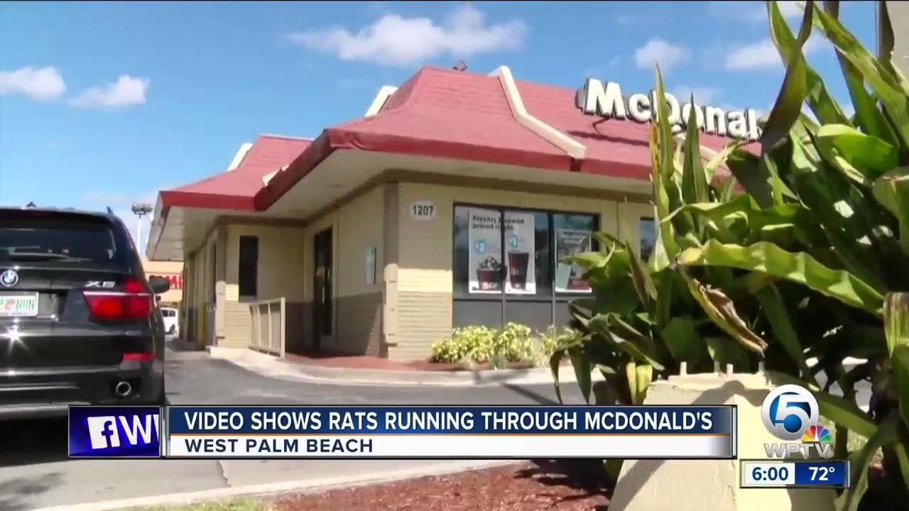 Para beach palm hispanos trabajos west en Dentista en