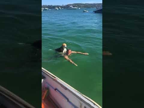 Monty and Sam swimming at Castle Rock Sydney Australia