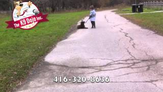 Little Boy Trains His Doodle Puppy Dog On Leash Obedience