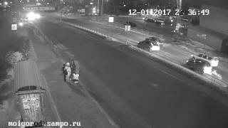 Водитель сбил сразу двух собак на «зебре» в Петрозаводске