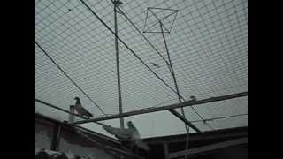 Почтовые голуби Кустаная.(, 2013-01-19T18:05:40.000Z)