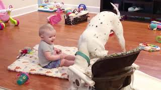 TOP BEST Funny Baby and Dog Fails Moments -  Baby and Dog Videos