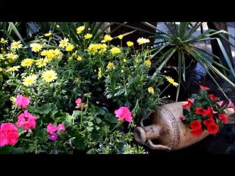 Цветы в саду: примеры композиций