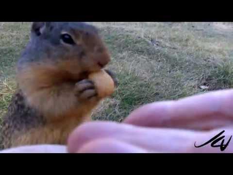 Cute Animal Encounter -  E  C  Manning Provincial Park -  Canada -  YouTube