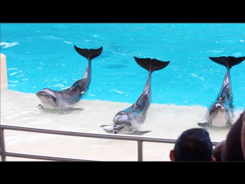 Marineland Canada's show with sea lions, beluga whales, and dolphins