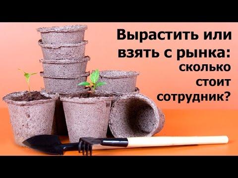 Вырастить или взять с рынка: сколько стоит сотрудник? - Елена Лимонова