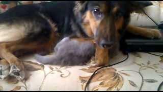 Собака-мать и котенок-сын. Няши