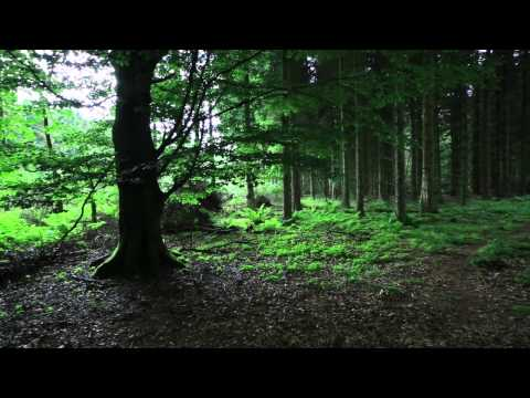 Forest Photography tips - finding compositions