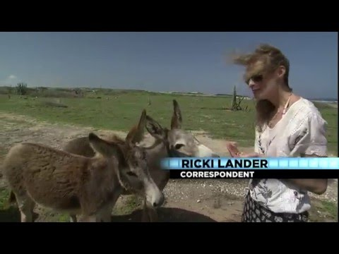 Giving Back: Donkey Sanctuary Aruba