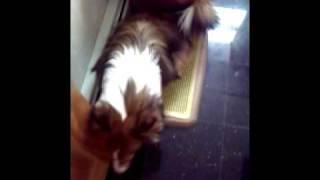 Kiwi Peeing on Her Potty