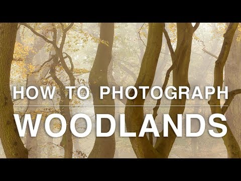 How to Photograph Trees, Mushrooms and Rivers | Woodland Photography Tips
