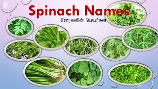 25 Keerai vagaigal(Names) in Tamil and English With Images|spinach Names|Greens Types|கீரை வகைகள்