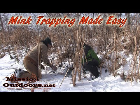 Mink Trapping Made Easy - MissionOutdoors.Net