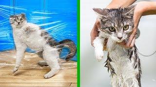 14 Lifehacków dla Kotów!
