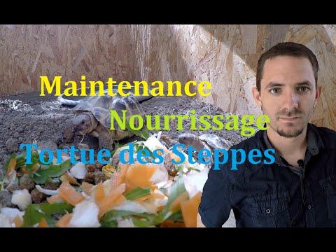 La tortue des jardin Enclos pour tortue tortue de terre